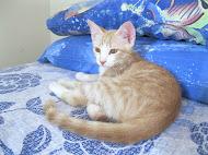 Sam,nato il 30/4/2012