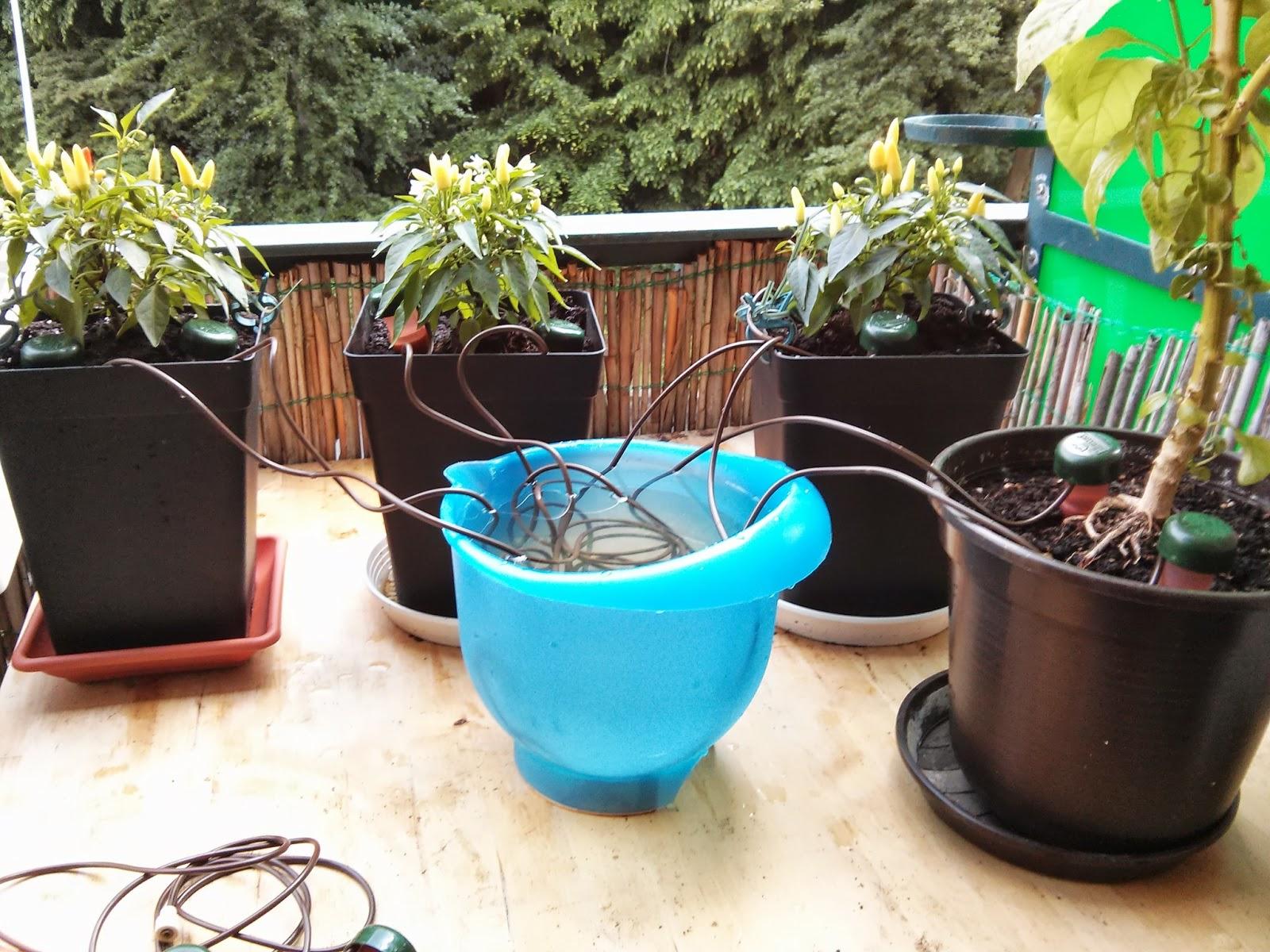 chili farmer chili pflanzen automatisch bew ssern. Black Bedroom Furniture Sets. Home Design Ideas
