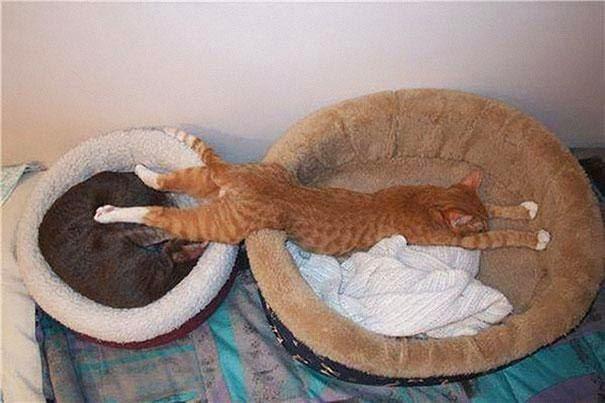 http://2.bp.blogspot.com/--6q17r3xHLE/U5Iwzq-QMdI/AAAAAAAAAcU/dlwNauUavRg/s1600/sleeping+cat+2.jpg