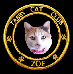 Tabby Cat Club Member