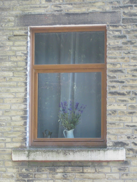 Lavender in the window