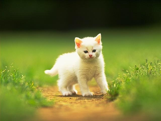 [Resim: kedi.jpg]
