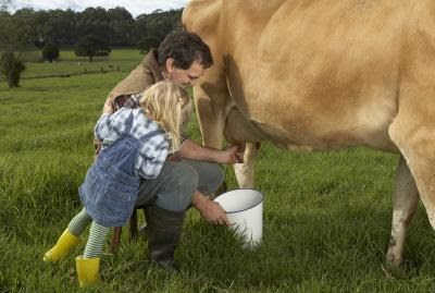 Farmer Milking Cow