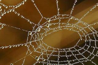 دراسة : قريبا سوف يكون هناك جلد صناعي للبشر.. من خيط العنكبوت~~سبحان الله