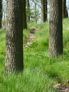 Wanderweg, Wanderroute, Rheingau, Wald, Waldweg