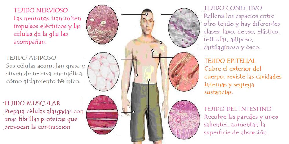 Camilo venegas dahms eca estudio y centro de aprendizaje - Tipos de tejados ...