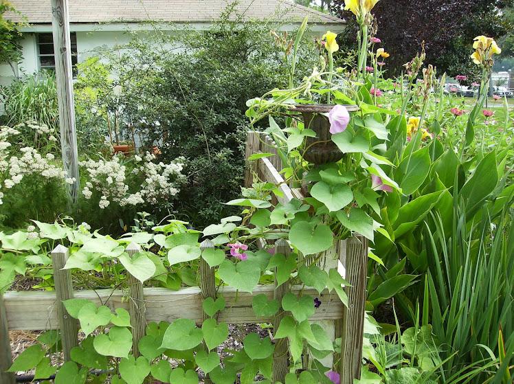 The kitchen garden...