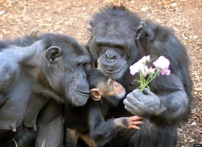 الحيوانات desktop-1425574588.jpg