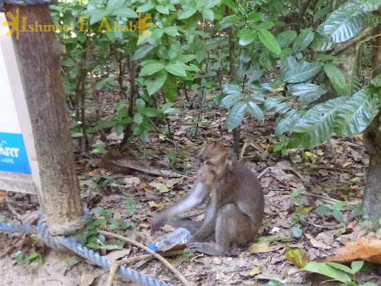 Monkey thief at Puerto Princesa Underground River