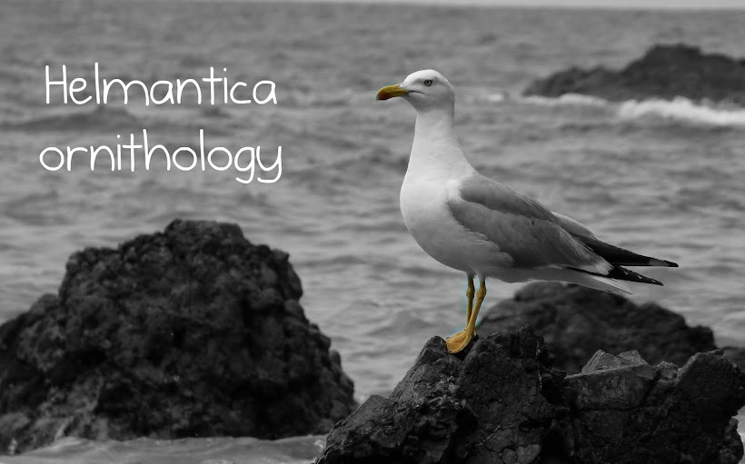 Helmantica ornithology
