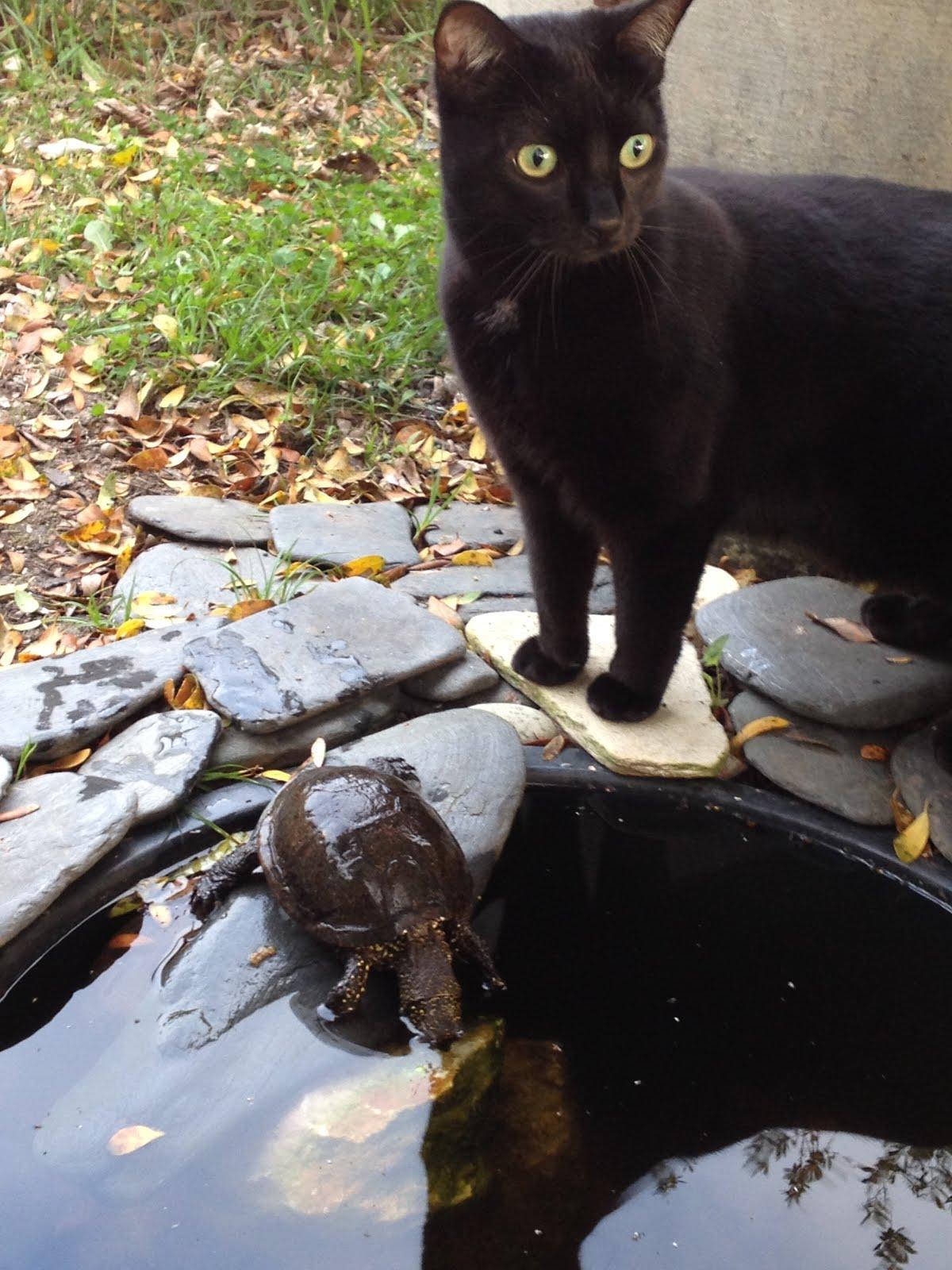 mila et la tortue