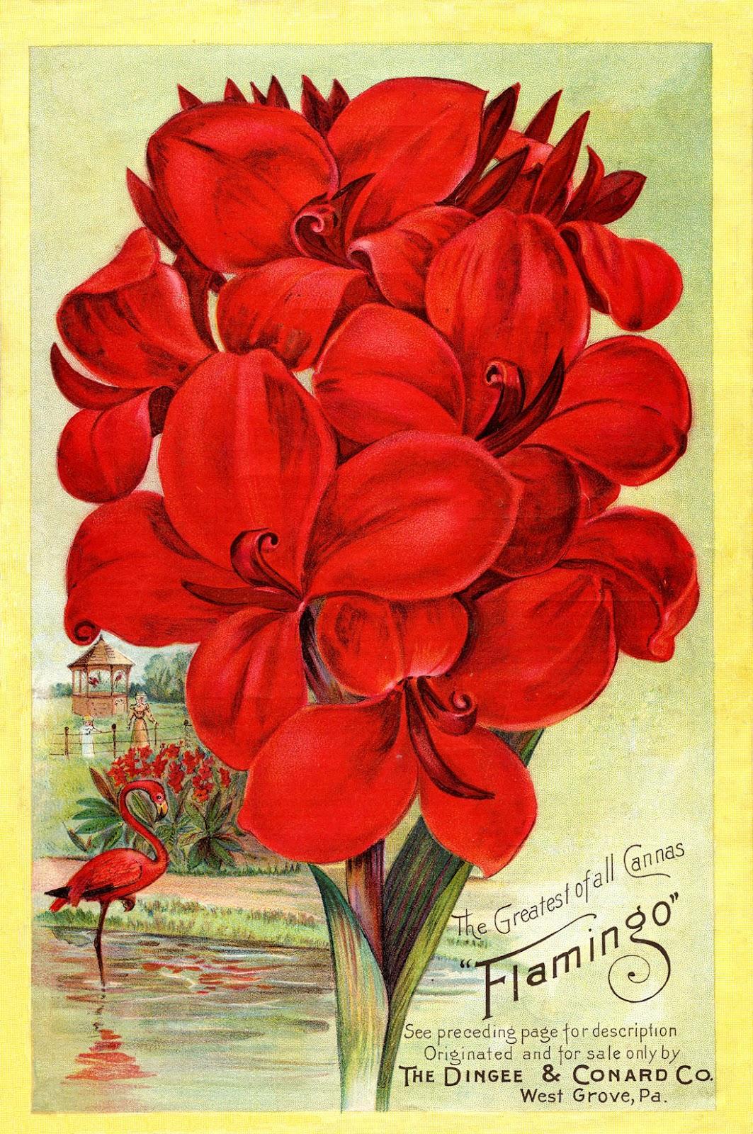 http://2.bp.blogspot.com/--8_QIZotiYA/UFkRN4exH6I/AAAAAAAAWYs/mRBNSr7U16c/s1600/Cannas-Flamingo-GraphicsFairy2.jpg