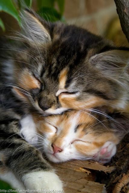 Two cute kittens.