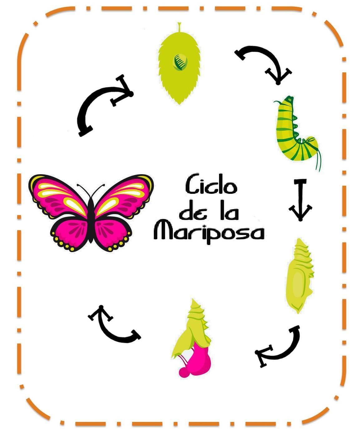 la vida mariposa: