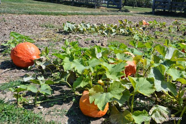 mount-vernon-pumpkin