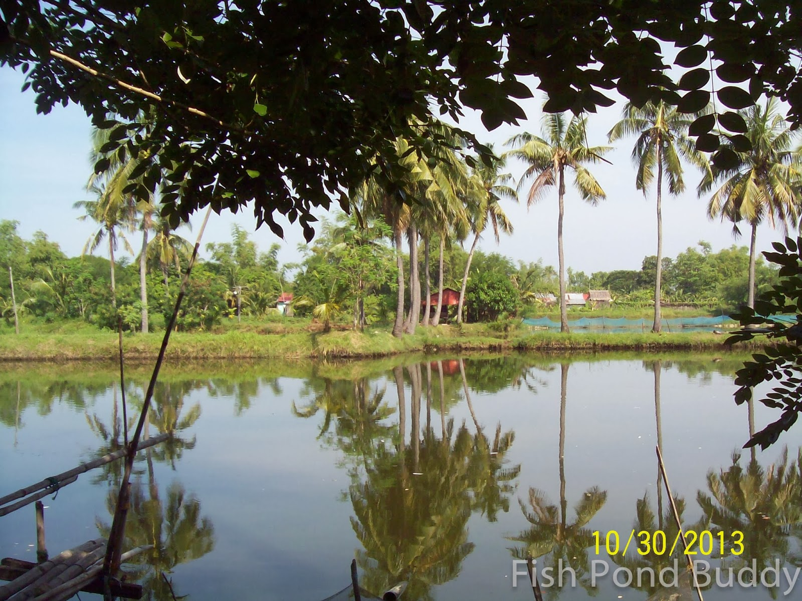 Fish Pond Buddy Uses Of Coconut Trees In Our Bangus