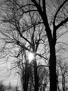 Black and White tree. Black and White tree. Posted by John at 11:07 AM
