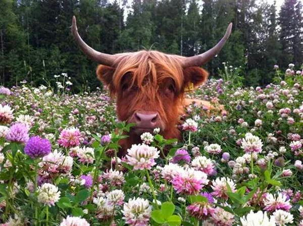 Funny animals of the week - 6 September 2014 (40 pics), animal photos