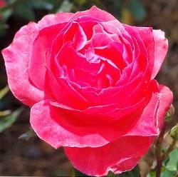 http://www.namesofflowers.net/oklahoma-state-flower.html