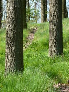 Wanderroute, Wanderweg, unteres Mittelrheintal, Mittelrhein, Rhein