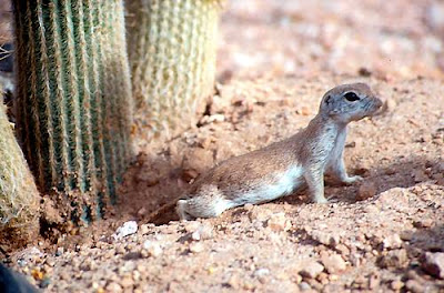 Australian Desert Animals Pictures