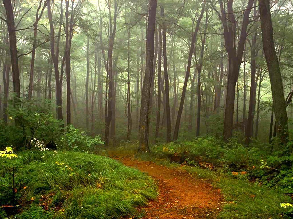 http://2.bp.blogspot.com/--AAhDyyddC8/ThGIEqpTTPI/AAAAAAAAA-U/QnUqYe_a3is/s1600/beautiful+nature+scene+woods+trees.jpg