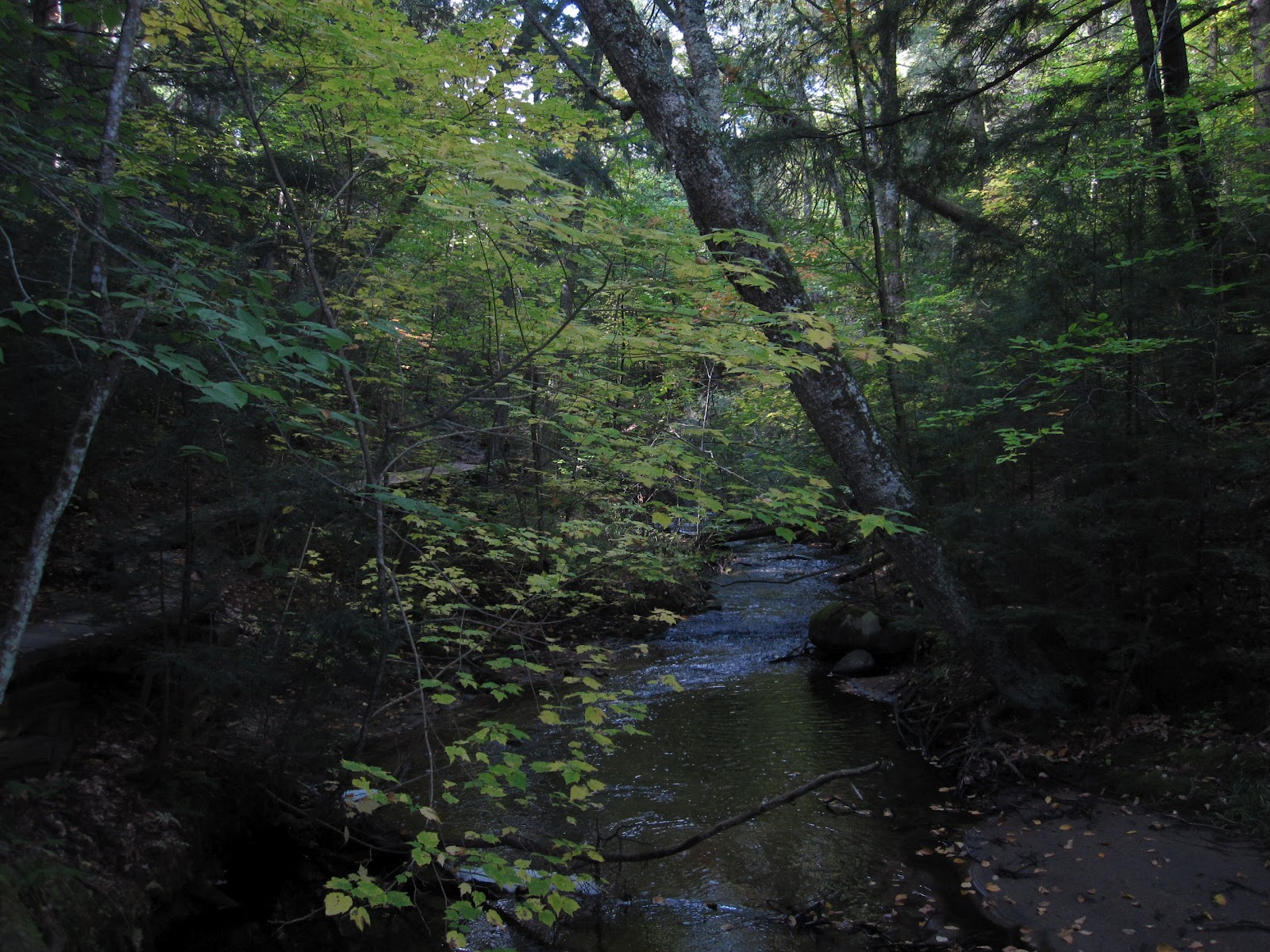 Hiking through the BBW was an enchanting experience. The trails winds  through many different terrains ranging from swampy lowlands to dry upland  mature ...