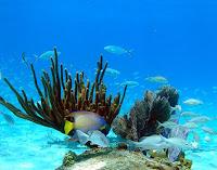 bahama, kota romantis, kota laut romantis