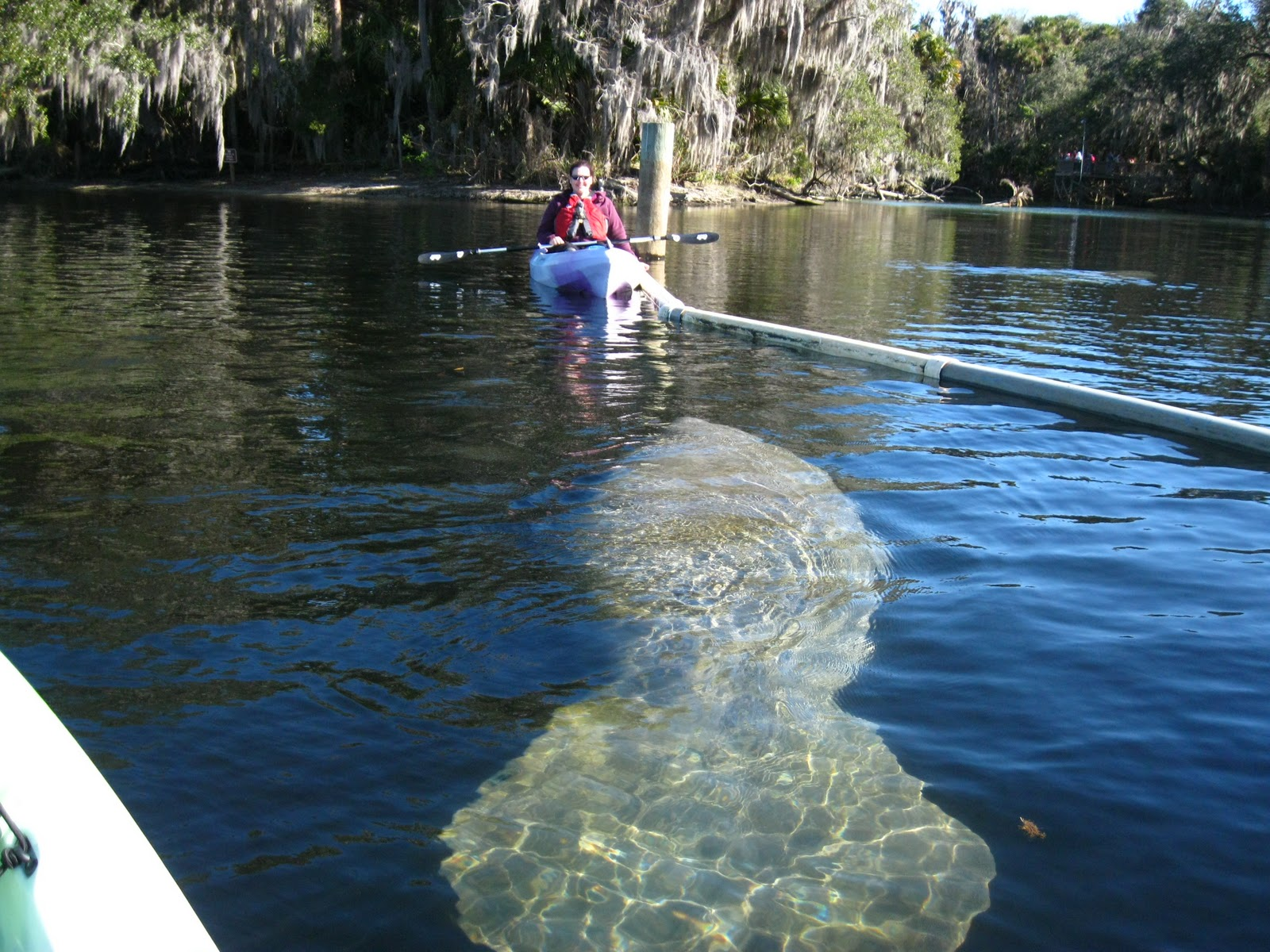 Florida Manatee Kayak Tours