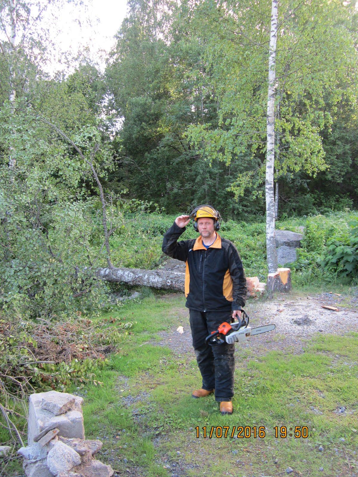 Pihapuiden pensaikkojen kaadot pensasaitojen leikkaukset Tampereen talousalueella
