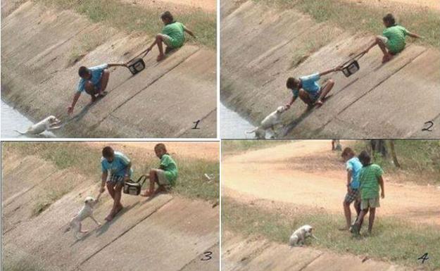 kisah-2-orang-remaja-yang-berusaha-menyelamatkan-kucing