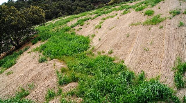 Talud restaurado de mina de carbón. http://www.panoramio.com/photo/72396683