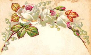 rose flower digital illustration