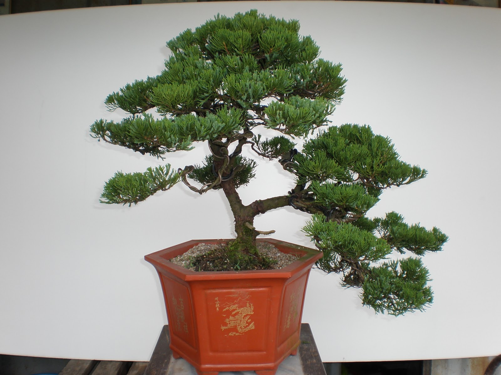 Soon Li Bonsai Nursery
