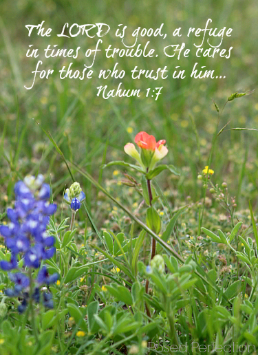 Food for the Soul ~ Nahum 1:8 - wildflowers