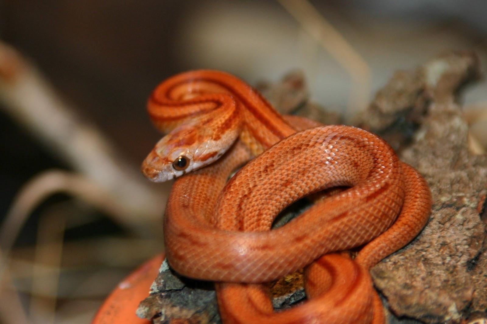 snake - photo #2