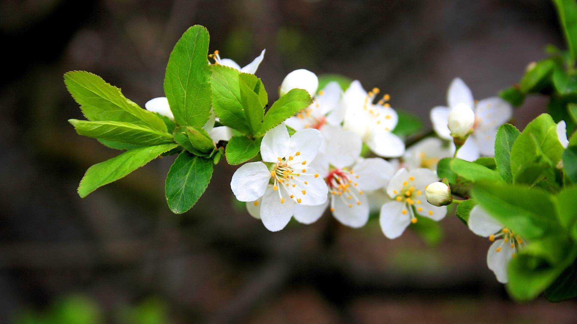 http://2.bp.blogspot.com/--BSx_-odGM0/TavkYrnPrkI/AAAAAAAACsE/UgiwIh_3sgU/s1920/HD+Flowers+1+(1).jpg