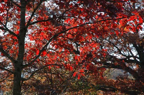 Tom s fall color at its peak
