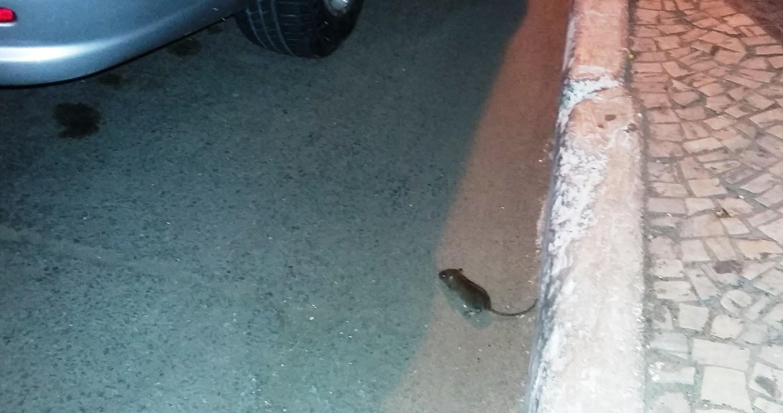 Jornalista fl vio azevedo a sua cidade est cheia de for A tua piscina ta cheia de ratos