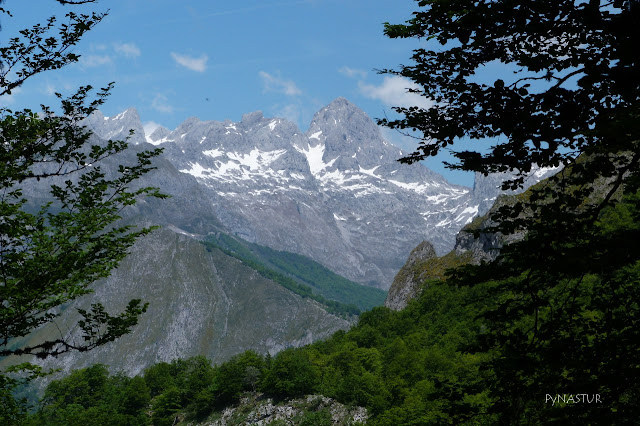 Peaks of Europe from Peloño Forest Asturias Spain