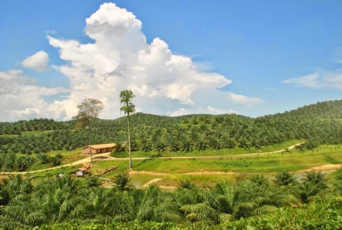 Lahan Pertanian Jadi Perkebunan Kelapa Sawit Suara Kutim