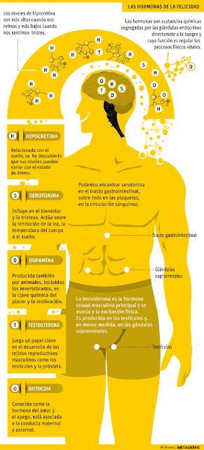 Figura 1. Las hormonas de la felicidad