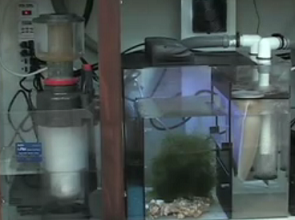 All About Aquarium Fish Marine Tank Sump System With