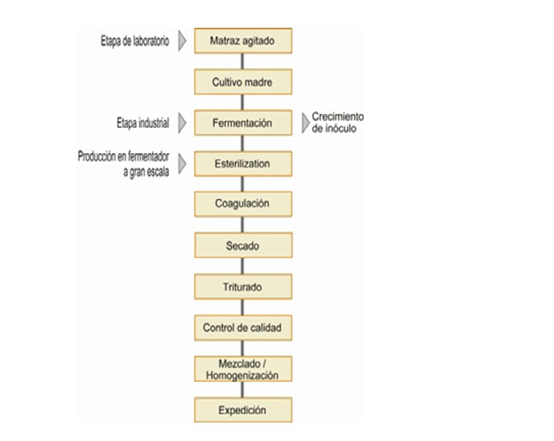 Tecnologia de alimentos ii procesos fermentativos for Procesos de produccion de alimentos