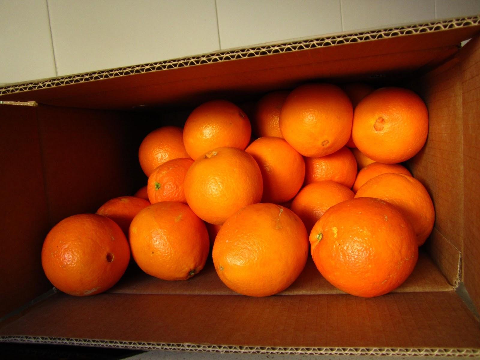 Cocina y descubre top naranjas - Naranjas del arbol a la mesa ...