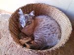 Xuxú Frederico - gatinho da Laís