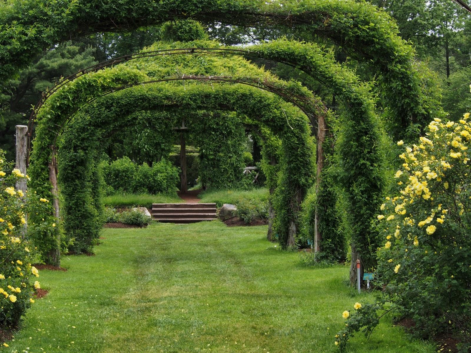 Into the Gazebo, #ElizabethPark #rosegarden 2014