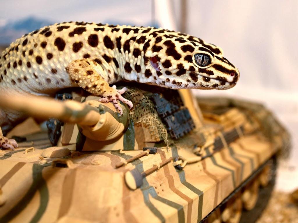 "<img src=""http://2.bp.blogspot.com/--DM-FQnswxc/UtkICP70T2I/AAAAAAAAIaQ/iyfiDb3am_A/s1600/animal-wallpapers-reptiles-leopard.jpeg"" alt=""reptiles wallpapers"" />"