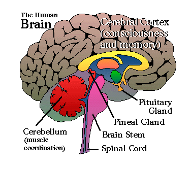 Werner\'s Cairns blog: Our Pineal Gland.