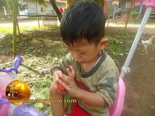 FOTO: Gigin dengan susah payah mengupas buah rambutan, ditambah rasa penasarannya untuk membuka cangkang / kulit buah rambutan